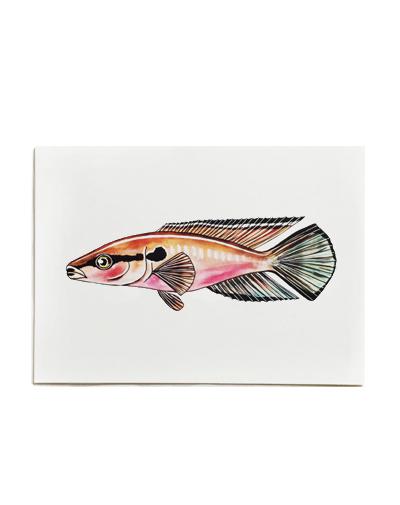 Fish on Friday-pauwoogkambaars