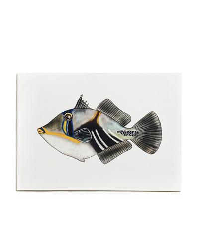 Fish on Friday-picassovis